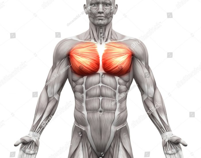 chest graphic