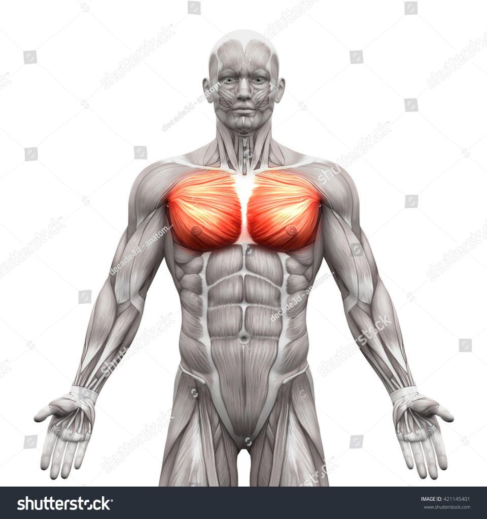 chest graphic